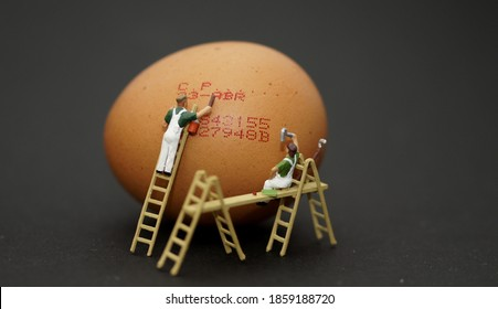 labelling of eggs so that they can know the expiry date