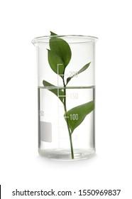 Laboratory beaker with plant on white background