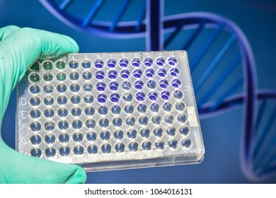 Laboratory DNA testing. A 96-well plate in the researcher's hand.