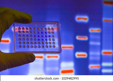 Laboratory DNA testing. Wells with biological samples on the background of electrophoretic gel.