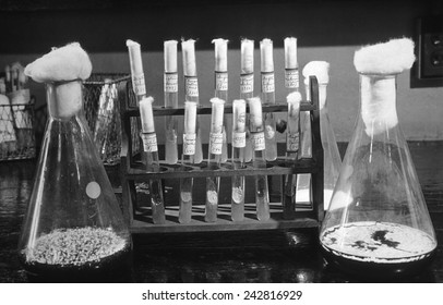 Laboratory flasks and test tubes used in the development of Penicillin. Ca. 1940.