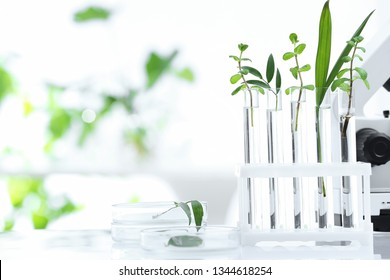 Laboratory glassware with different plants on table against blurred background, space for text. Chemistry research
