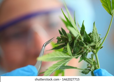 laboratory medical cannabis science pharmacy medicine