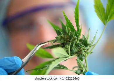 laboratory medical cannabis test science
