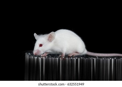 Rat free vampire tubes-8715