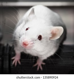 Laboratory mice in the rotarod performance test.