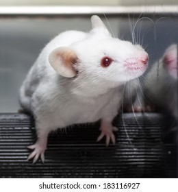 Laboratory mices in the experiment test.