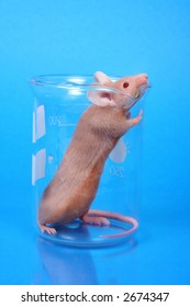 Laboratory Mouse - little fancy mouse in a beaker on blue paper background