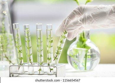 Laboratory worker taking test tube with plant from holder