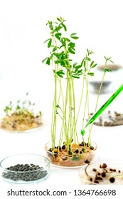 Laboratory workplace for creating modern transgenic plants ,seeds of watercress, lentils, and others collection of plant samples