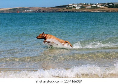 A Labrador dog chases after a stone in the blue sea shallows, parallel to the viewer frozen in time as it leaps from the water, light refracts in the sea as waves gently break in the foreground.