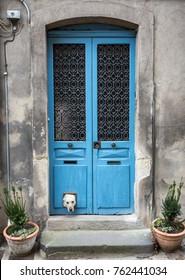 Labrador with head through cat flap in blue door
