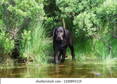 Labrador puppy dog scared of water
