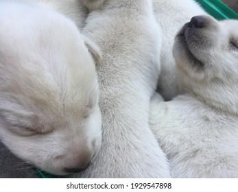 A labrador puppy in a far green basket,Puppy in basket,Playful puppies