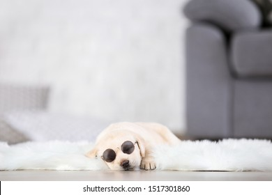 Labrador puppy with sunglasses lying on white carpet at home