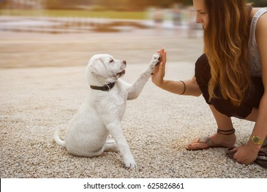 Labrador puppy and young woman give a High Five