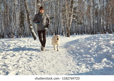 Labrador retriever dog for a walk with its owner man in the winter outdoors doing jogging sport