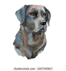Labrador retriever - hand painted, isolated watercolor dog