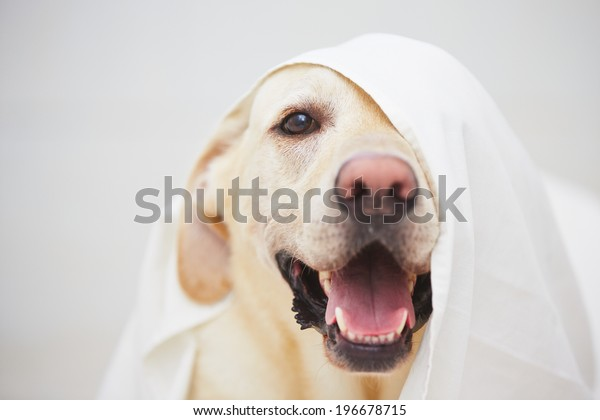 Playing White Bed Sheet Stock Photo