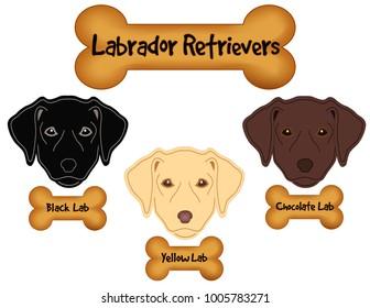 Labrador Retrievers, Black Lab, Chocolate Lab, Yellow Lab, dog bone treats.