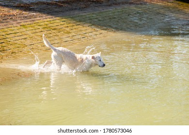 labrador is swimming in a canal