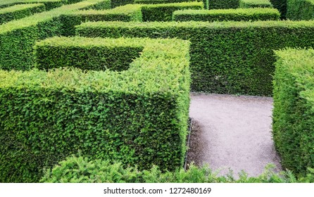 Labyrinth maaze in garden, decision or choice concept