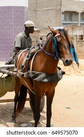 LAC ROSE reg., SENEGAL - APR 27, 2017: Unidentified Senegalese man drives a cart with a horse. Still many people in Senegal live in poverty