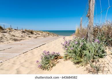 LACANAU - LE PORGE (French Atlantic coast), access to the beach