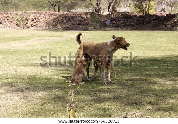 lactating bitch with two puppy-dogs
