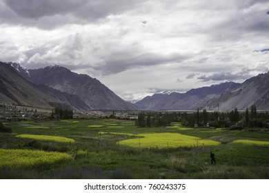 Ladakh, India, Nubra valley, July 2017, the beautifully green Nubra valley stretches between the high and bare hills while a lonely figure in the foreground arranges the water canalisation