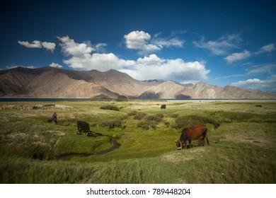 Ladakh, Pangong, Lake India