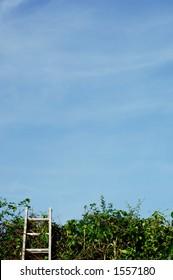 ladder against hedge
