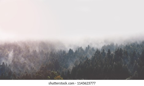 Ladskape of wild Ukrainian nature. Forested mountains are smoking. Magic coniferous forest of Carpathians Mountains. Morning fog and clouds above evergreen conifers.