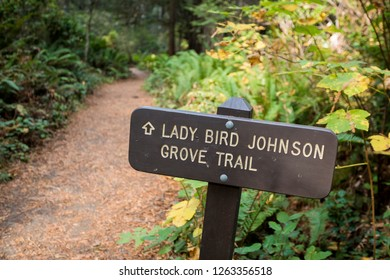 Lady Bird Johnson Grove Trail is one of the most iconic trails and areas for exploration in the California Redwoods National and State Park. This is a popular filming area for movies like Star Wars.