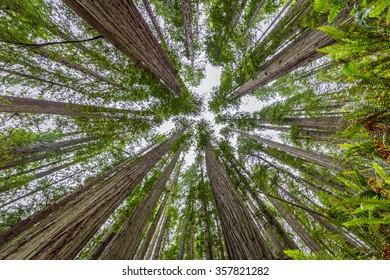 Lady Bird Johnson Grove trail, Redwoods National Park