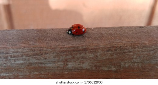 Lady Bug close up view