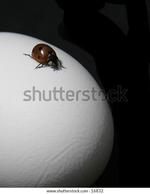 A lady bug explores an egg.