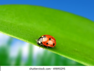 Lady bug on green leaf with blur background