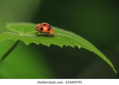 Lady bug photographed in the woods.