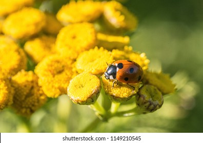 Lady bug in the summer.
