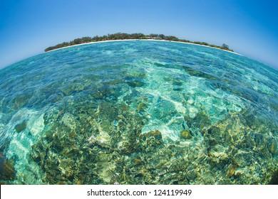 Lady Elliot Island, Fish eye lens