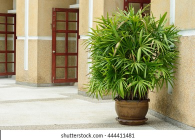 Lady palm tree in pot decoration at front of building