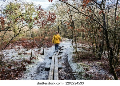 a lady is walkin in a forest, with snow, with a dog (brecon beacons national park)