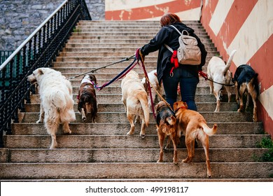 Lady walking with a bunch of dogs in the old city of Genoa in Liguria region, Italy.