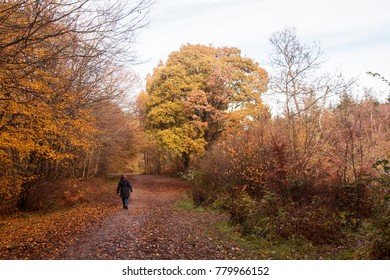 Lady walking in Sussex woodland in autumn