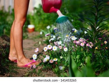 Lady watering flowers in a green garden