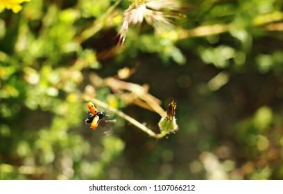 Ladybird among the plants