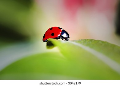 Ladybird bug on a leaf with green and pink background