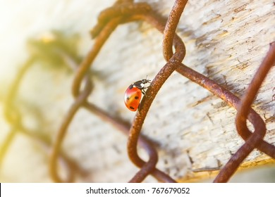 The ladybird crawls along the metal rusty mesh up to the sun. The concept of persistence, perseverance in achieving the goal