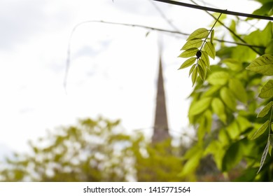 A ladybird or ladybug on green spring leaves in the foreground, with the spire of Norwich Cathedral in the background. Norwich, England, UK.